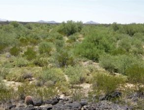 SOLD!- Arizona Desert Ranch