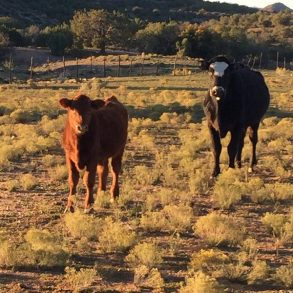 Back on the Market! Knight Creek Ranch