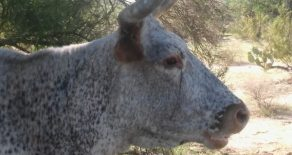 Coming Soon!- Cochise County Irrigated Cattle Operation