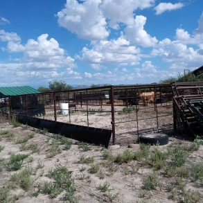 Owner May Carry!- Highway 191 Cattle Trading