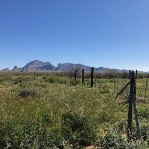 Spring Feed and Saddle Mountain