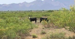 Buyer Scenic Ranch up to $900,000